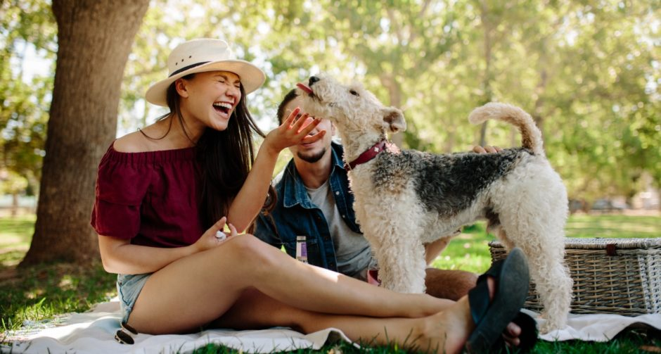 day trip essentials for your dog