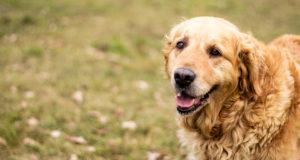 happy senior dog