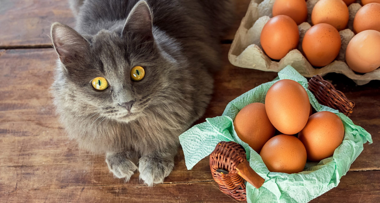 safe human foods for cats - eggs