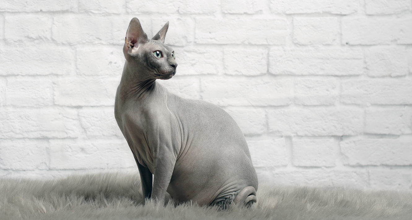 Cats That Don't Shed