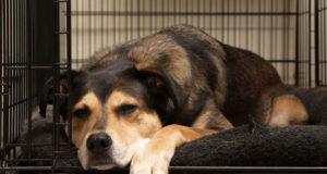 dog crate training tips
