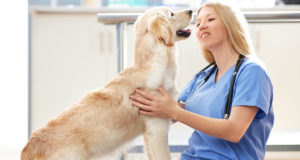 periodontal disease in dogs and cats - vet visit