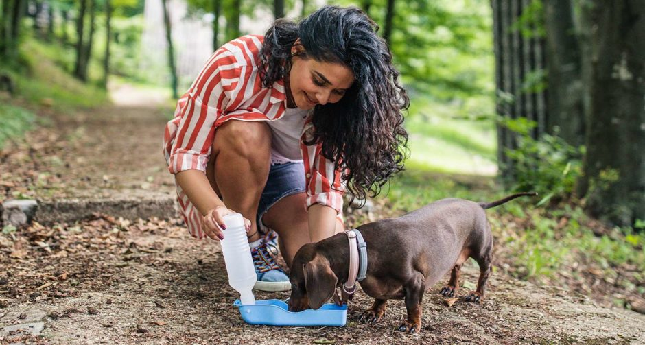 Dehydration in Dogs