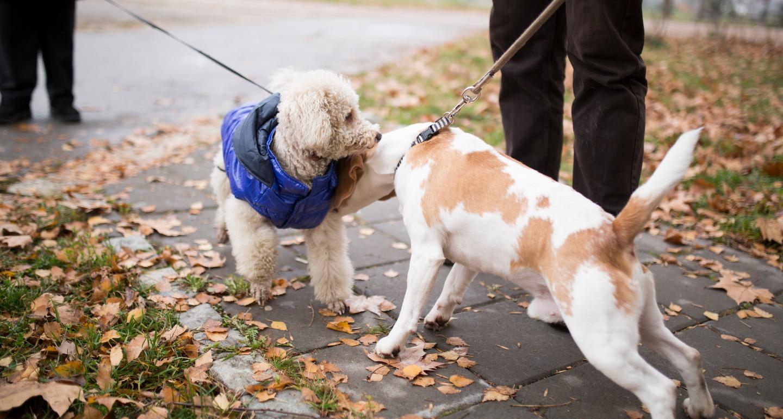 dog meeting dog