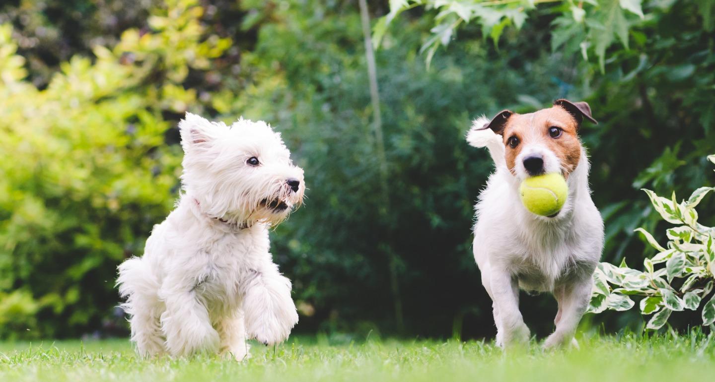 dog with dog