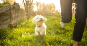 6 Tips for Boosting Your Dog's Confidence HERO