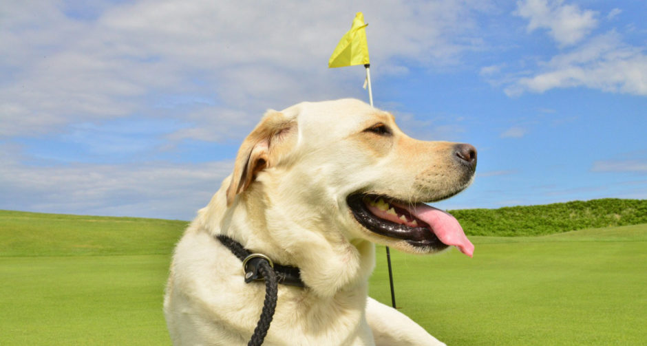 dog friendly golf courses