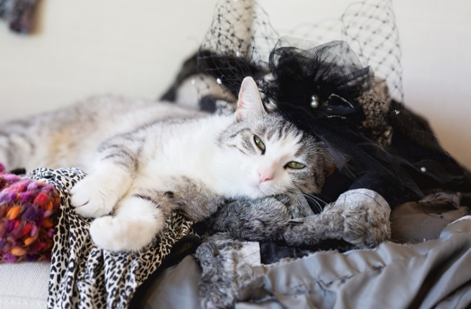 tabby-cat-lying-messy-clothing-picture-id971032638