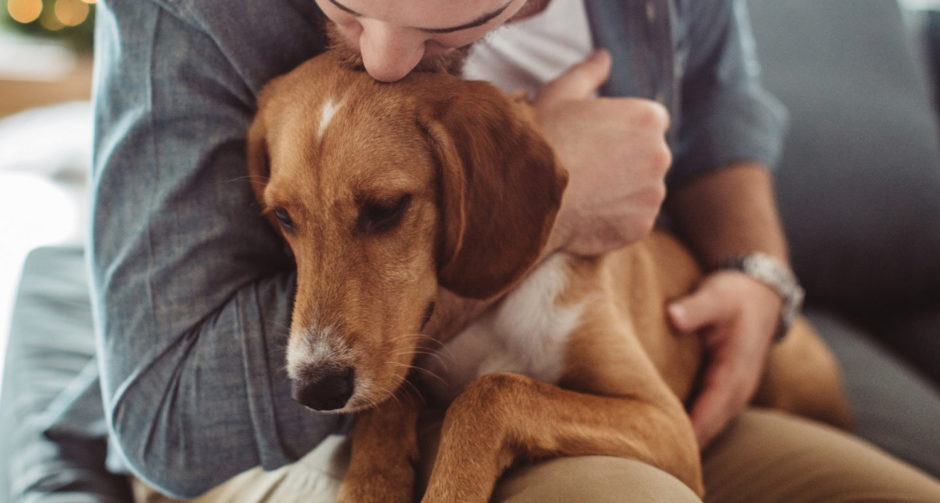 caring for a dog with cancer