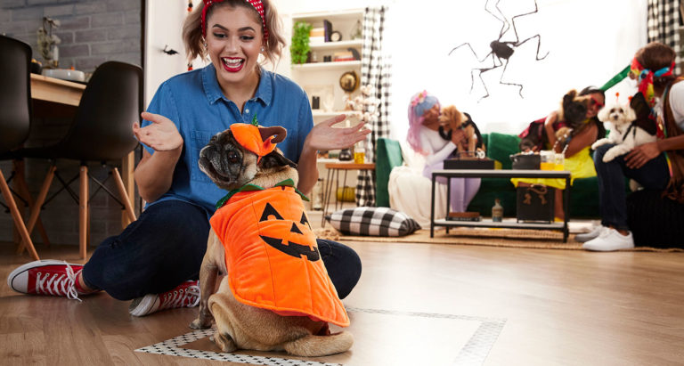 Halloween party games for dogs and cats