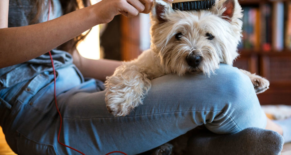 pet grooming at home hero image: dog being brushed