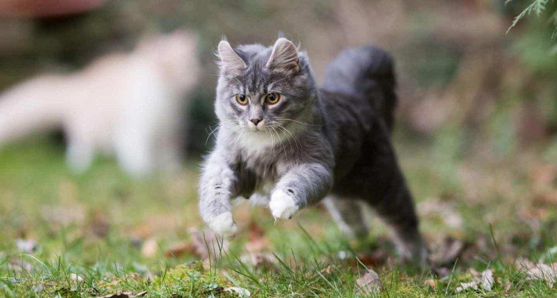 do cats always land on their feet?