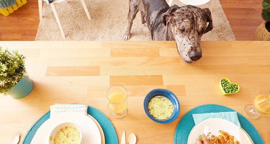 Pet House Rules: Should You Be Giving Dogs Table Food?