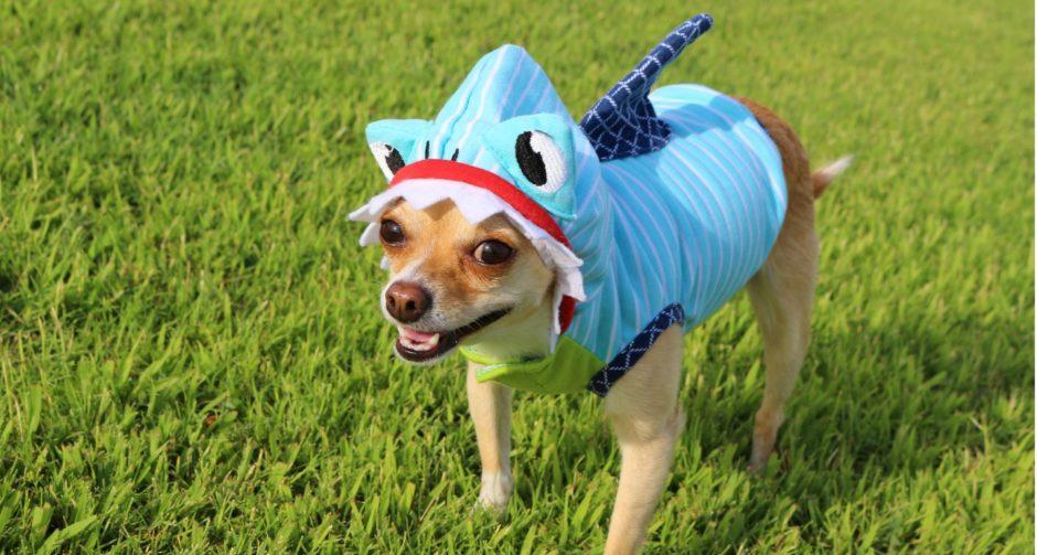 Pet Apparel Dog Halloween Costume Ideas