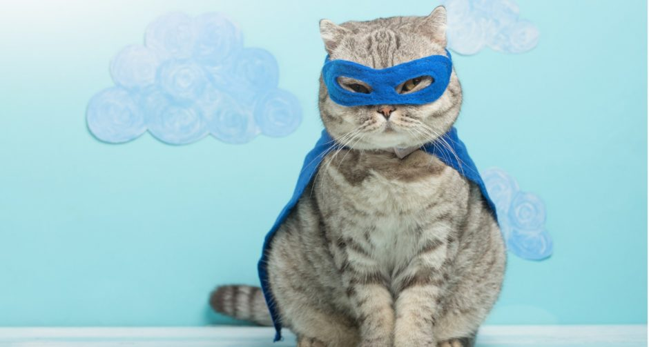 Halloween Cat Costume Ideas and Cat Dress,Up Tips