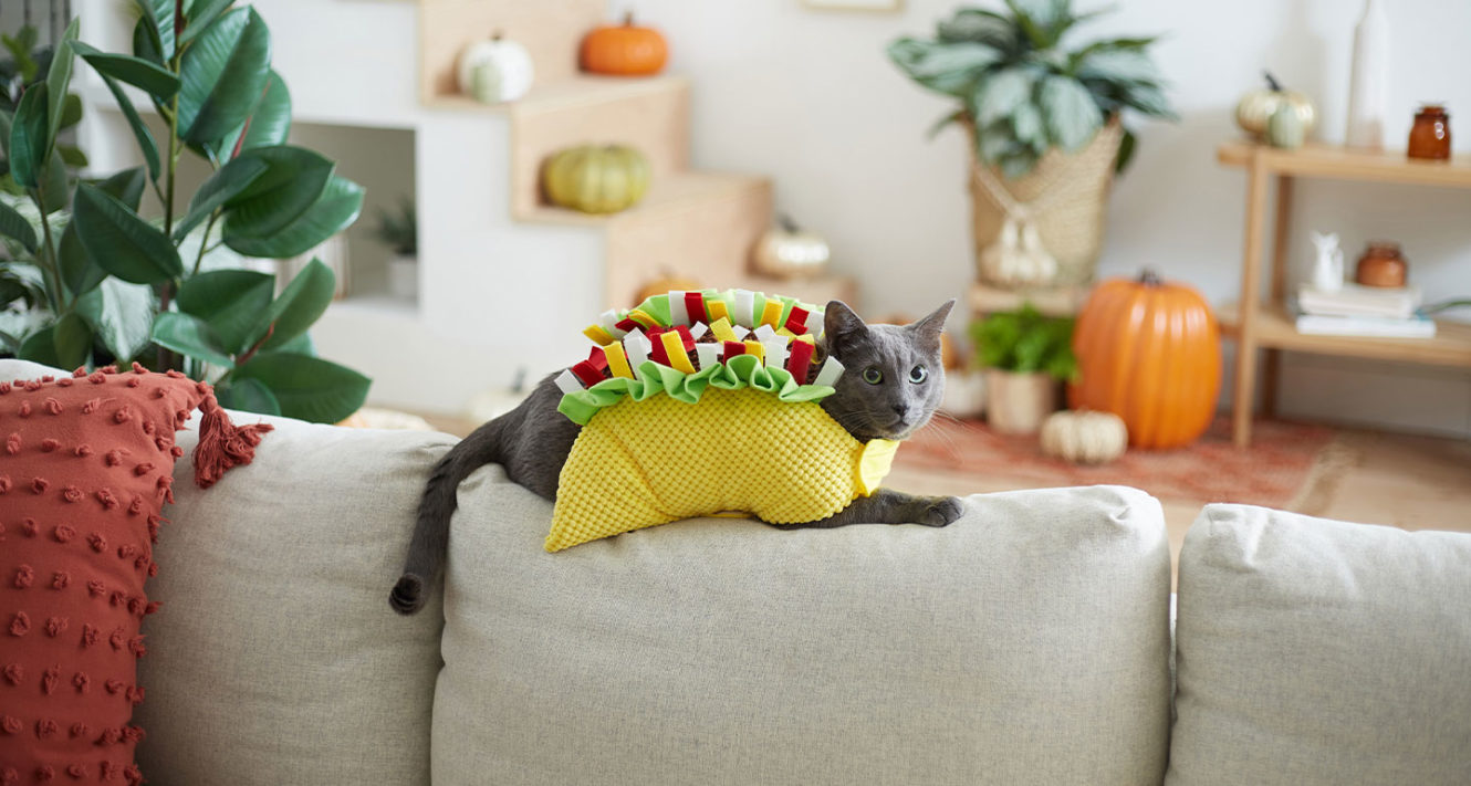 cat halloween costumes ideas that are cute