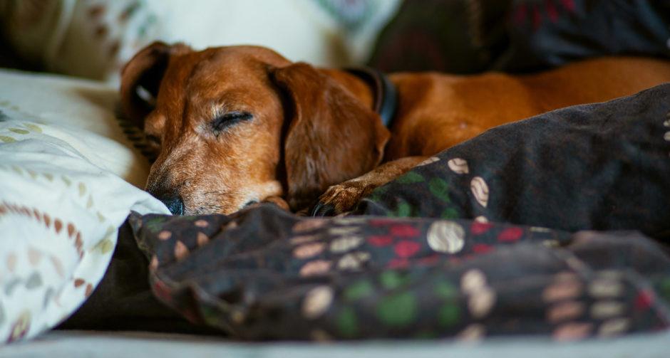Que tipo de ambiente doméstico é mais adequado para animais de estimação idosos?