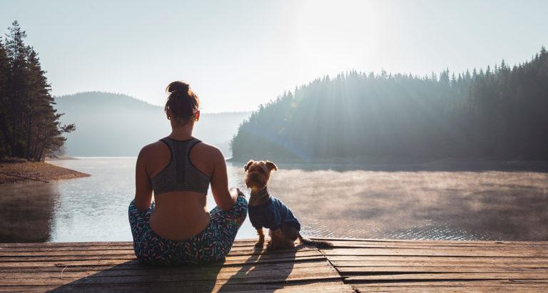 canine meditation