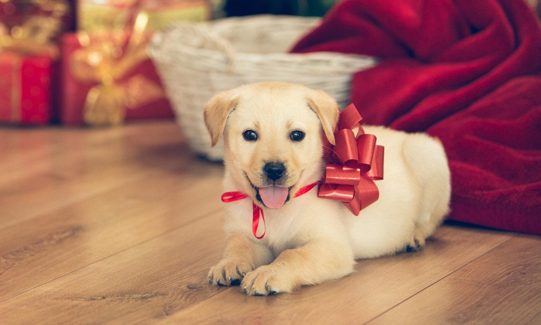 pet as gift