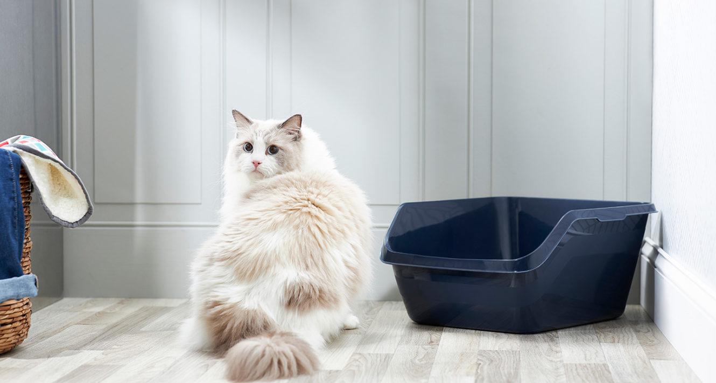 Cat Not Using Litter Box