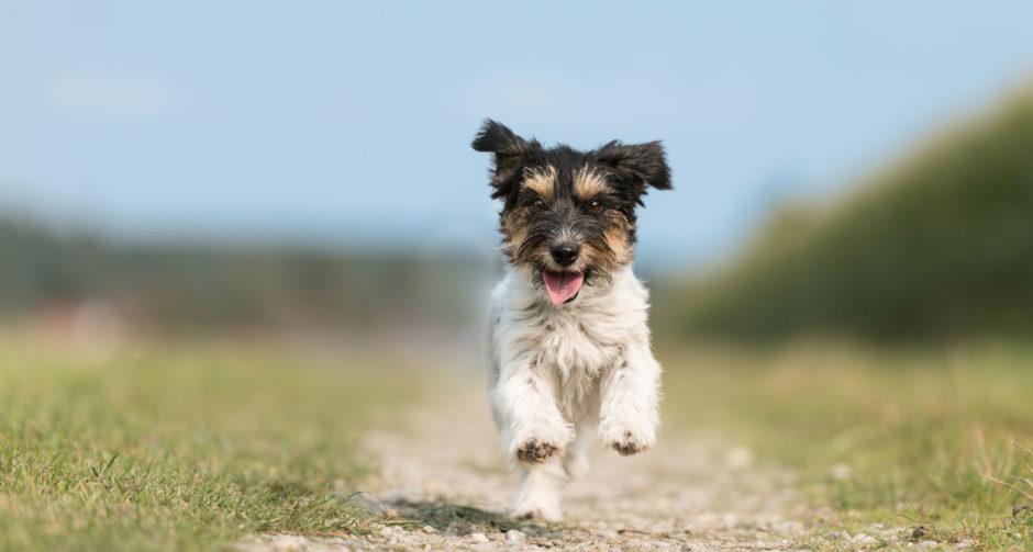 Dog training: Teach dog to come
