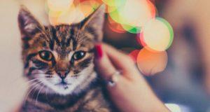 Christmas names for pets