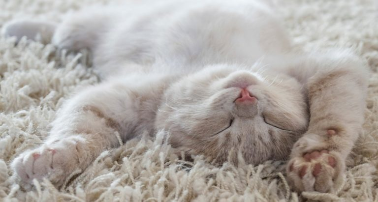 De-Stress Your Pets With Relaxing Music for Cats and Dogs
