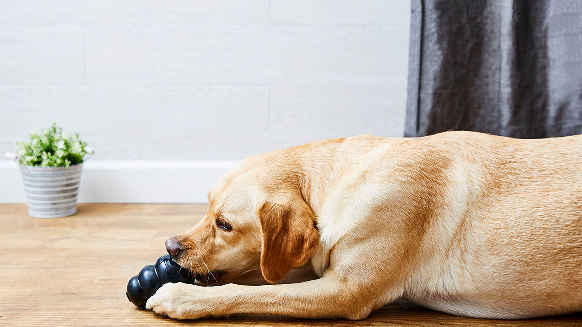 dog toys for tough chewers