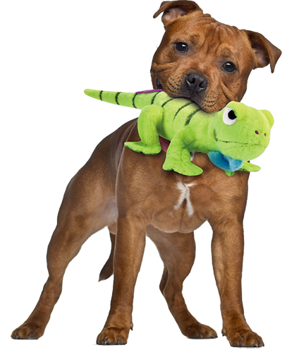 durable dog toys for destructive chewers