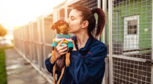 animal shelter facts