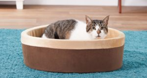 Orthopedic Pet Beds for Arthritis in Cats