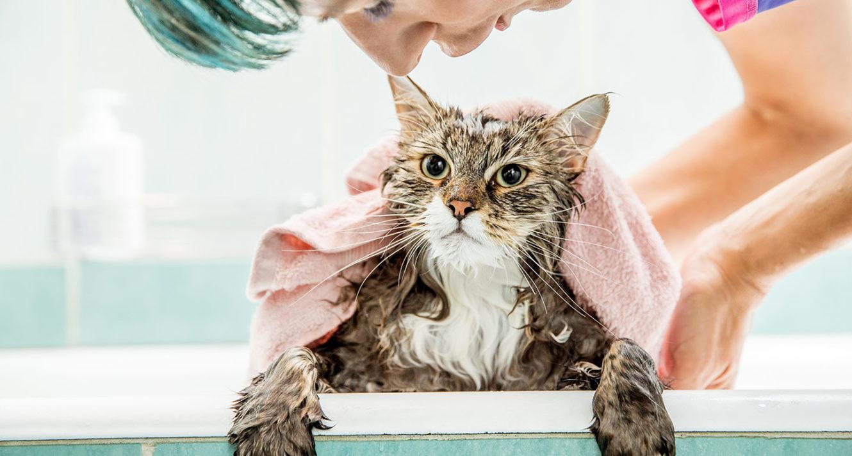 Flea Shampoo for Cats