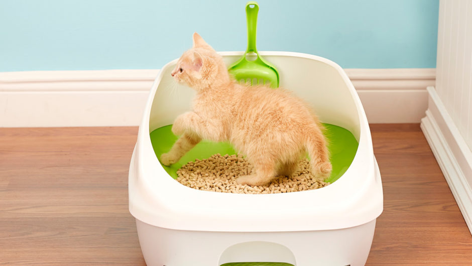 how to get a kitten to use the litter box