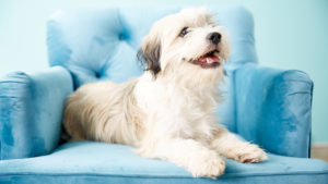 What to Look for in Probiotics for Dogsprobiotics for dogs