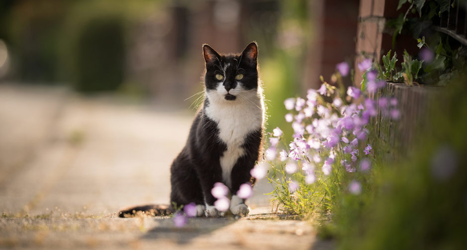 flea medicine for outdoor cats