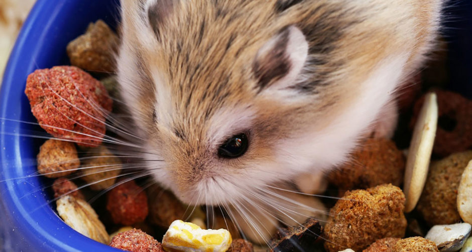 Hamster Diet: All About Vitamins