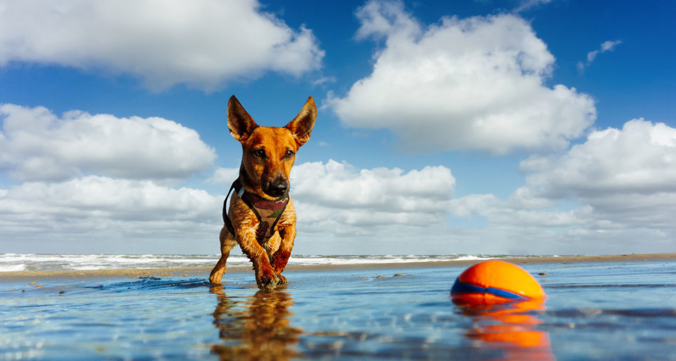 dog water toys