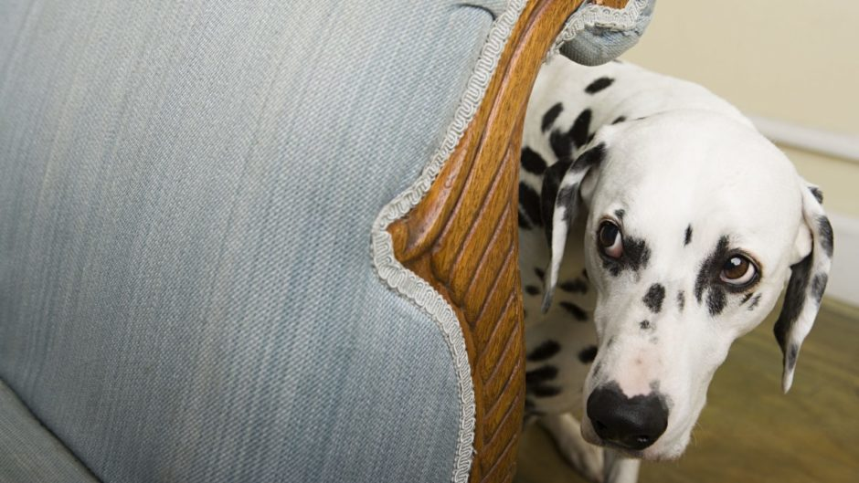How to Get Your Nervous Dog Ready for the 4th of July