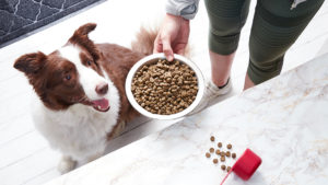 Choosing the Best Dog Food for Sensitive Stomach Issues