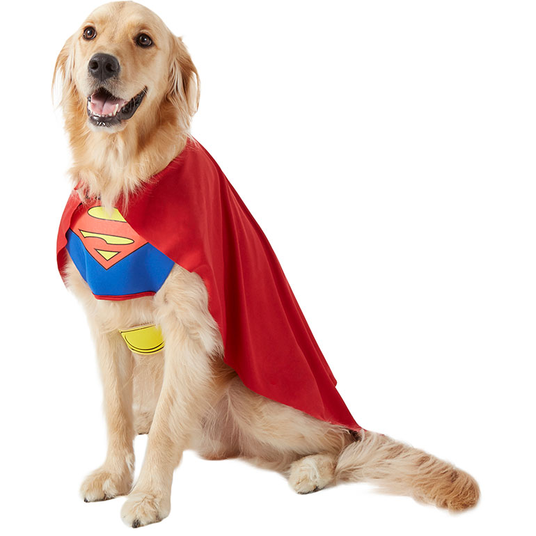 Matching dog costumes - superman and lois lane