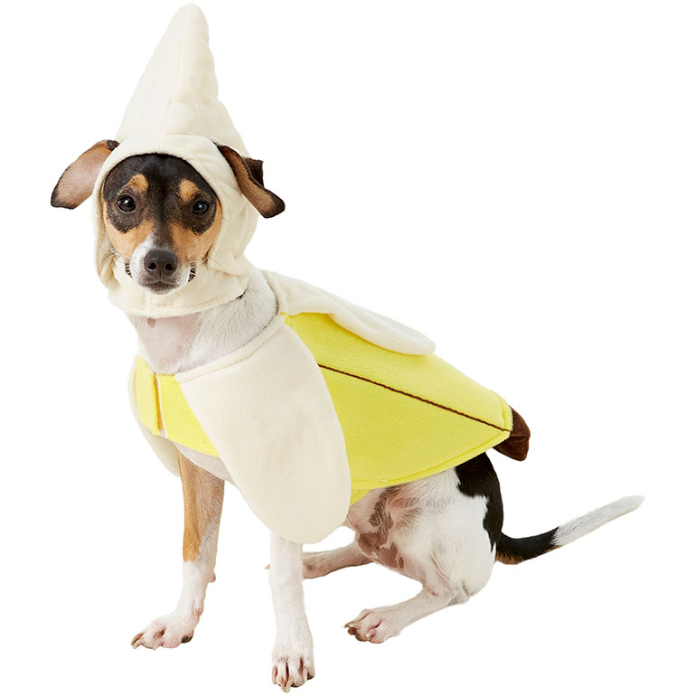 matching dog and human costumes - banana and monkey