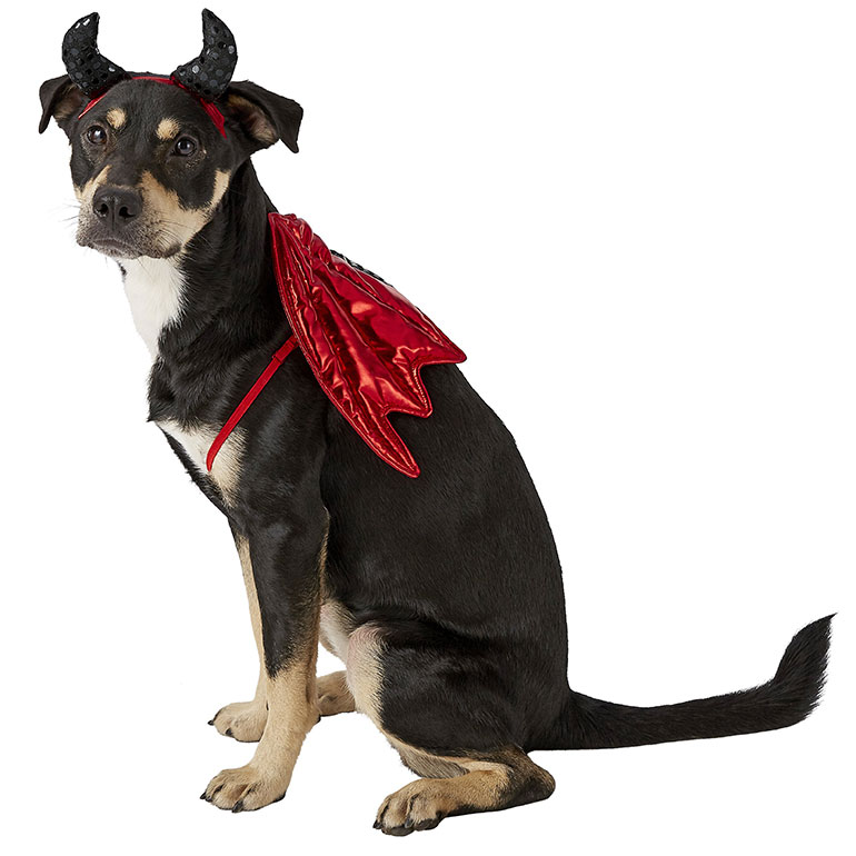 humand a dog matching costumes - devil