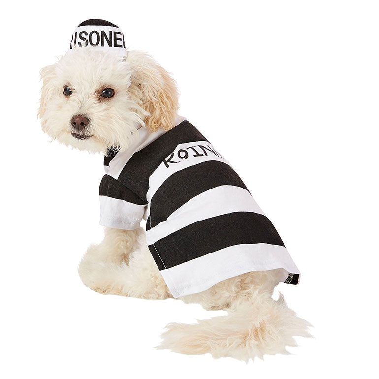 human and dog matching costumes -prisoner