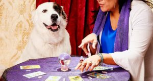 I Went to a Dog Psychic and Here's What Happened