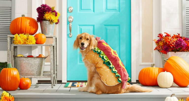 large dog halloween costumes - larger and giant breeds