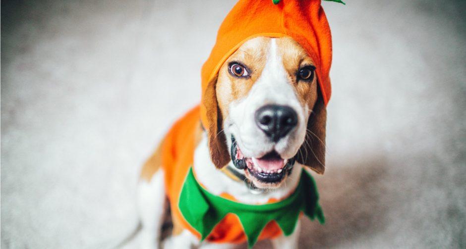 Spooktacular Halloween Dog Names