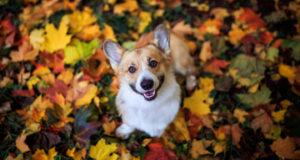 fall pet names