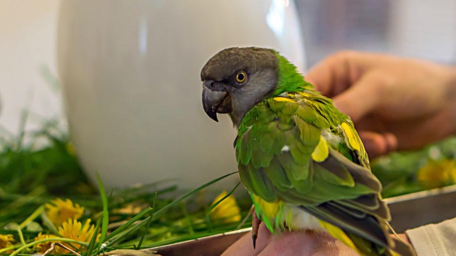 Bird-Safe Edible Flowers