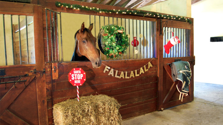 holiday decorations for your horse stall