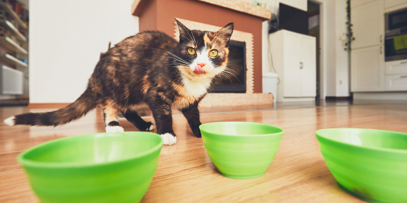 Thirst is a symptom of hyperthyroidism in cats